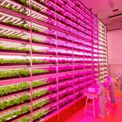 Vertical Farming Enclosures